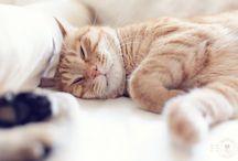 ✧ We're Cobbitria forest cats ☾✧ / https://cobbitria.net/