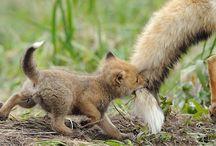 Animals / Cute!