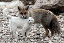 Fluffy Animals