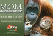 MOM: Missing Orangutan Mothers / Mother's Day is the perfect day to celebrate and pay tribute to orangutan mothers. The MOM – Missing Orangutan Mothers Campaign is our way of doing precisely that! The MOM Campaign is a positive way to bring attention to the crisis facing these beautiful red apes by encouraging people to help protect them. Orangutan mothers and babies have an incredibly close relationship. Learn more on our site: http://redapes.org/mom