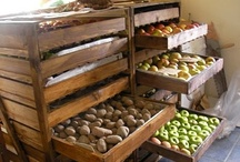 Cooking: Food Storage, Etc. / by Marjorie DuPree Marshall