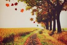 Favorite Season / by Kirsten Hess