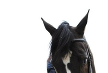 horses / by Disney