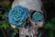 Gardening plants - succulents / Gardening