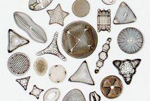 Diatoms & Radiolarians / by Donn Williams