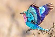 Birds / Beautiful and Unusual Birds