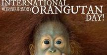 International Orangutan Day / International Orangutan Day (Aug 19th) is the greatest day of the year! What will you do to help the orangutans?
