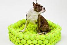 Reciclando para tus Mascotas / Reciclando y Reutilizando Materiales Para El Bienestar De Tu Mascota / by Ecomania