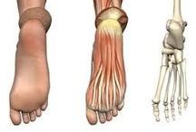 Voeten - Anatomie / Anatomie van de voet en het been.  Voeten Centraal