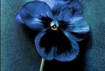 Spectrum > Blue