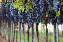 wino&winnice