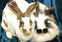 Available Fuzzy Critters / Rabbits, guinea pigs, rodents, and more!