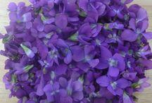 Sweet Violets - Orvokkeja / Sweet Violets