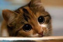 Kitten whiskers / Kittens