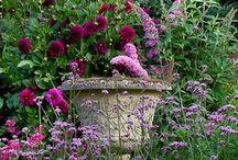 English Cottage Garden / Cottage Garden