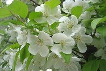 Spring - Kevät / Spring has Blossomed