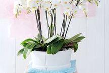 Prachtige orchideeën voor in huis / Voor welke sfeer je ook gaat in jouw interieur: landelijk, klassiek, strak of modern; elk interieur maak je af met de juiste accessoires. Zoals met deze prachtige orchideeën. Te bestellen via http://www.hetbestevandekweker.nl/