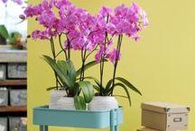 Interieurinspiratie met orchideeën / Doe hier inspiratie op over hoe je met orchideeën je huis kunt afstylen. Te bestellen via http://www.hetbestevandekweker.nl/