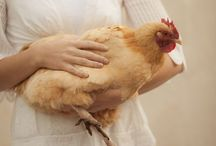 The Chicken and the Egg / The Egg and the Chicken