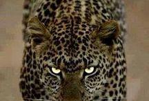 Wild Animal Print / Alll about animal print