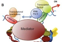 Cohesins and cohesinopathies / Cohesin is a ring-form multifunctional protein complex, which was discovered during a search for molecules that keep sister chromatids together during segregation of chromosomes during cell division.  Read this review and sign up to receive The Application of Clinical Genetics journal here: http://www.dovepress.com/genetic-basis-of-cohesinopathies-peer-reviewed-article