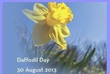 Daffodil Day 30 August 2013 / Fundraising for the Cancer Society and of course, a great opportunity to dress mellow and yellow!