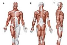 The fascial system / Abstract: Every body structure is wrapped in connective tissue, or fascia, creating a structural continuity that gives form and function to every tissue and organ.  Read this commentary and sign up to receive Journal of Multidisciplinary Healthcare here: http://www.dovepress.com/clinical-and-symptomatological-reflections-the-fascial-system-peer-reviewed-article-JMDH