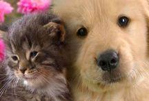 Kleine puppy's en kittens
