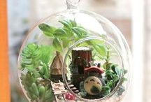 Garden - Minikert