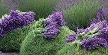 Garden - Herbs and Veggies