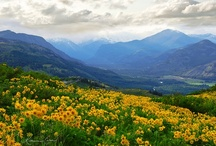 Spectacular Images of all things Methow! / Beautiful and Fun sites and happenings in Mazama, Winthrop, Twisp, Carlton & beyond.  Camp in our Valley.  You will have a fabulous time!