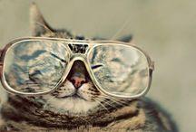 Amor por las gafas