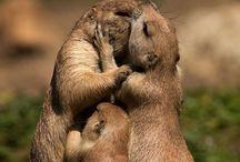 Awwwwwwww / Touching,Heartwarming,Loving,Kind,Sweet, Beautiful,Inspiring or Positive / by Marcia Ricketson