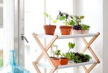 Hortas & Jardins Verticais