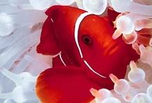 Animals - Sea Creatures / by Mandala Mai