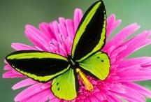 Animals - Butterflies & Moths / by Mandala Mai