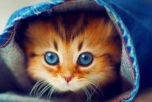 Animals - Cats / by Mandala Mai