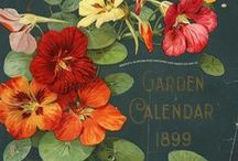 beautiful gardening ideas!