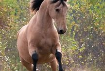 Horses / Beautiful majestic horses. They always have a mysterious sense of freedom about them don't you think?