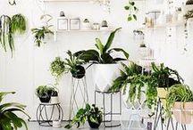 Urban Jungle Inspiration für Mamas / Urban jungle inspiration, Green Living, Zimmerpflanzen, Palmen, Kakteen, Pflanzen, Wohnen mit Kindern, Grünpflanzen