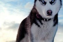 Dog's everywhere;) / cute and awesome dog!!!