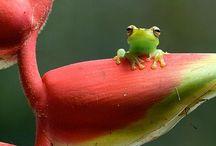 Micro Cuteness! / Little pygmy animals!