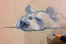 Animals//Bears
