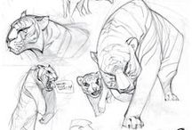 Animals//Tigers-Lions-Ceeta-Panther-Cats