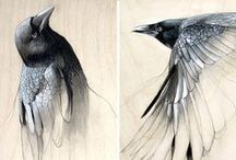 Animals//Heron-Pigeon-Eagle-Flamingo-Crow-Duck-Birds