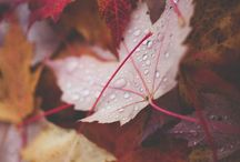 Autumn / Autumn time...
