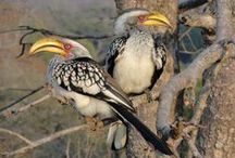 Birds / Birds you can see in and around Hoedspruit