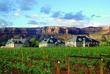 Colorado Wine Country / Colorado wine and cycling make the perfect pairing! See why at http://www.atyourpacebiking.com/product/colorado-wine-country-grand-junction/ / by At Your Pace Cycling