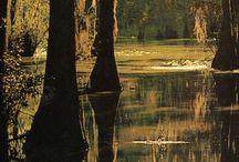 Louisiana / LA favorites / by Tracy Morton