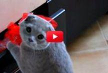 Videos Cute *-* / somente videos fofos